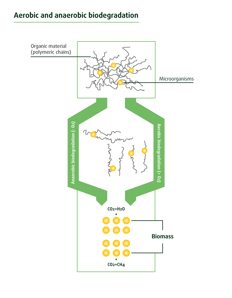 Aerobic and anaerobic biodegradation visual
